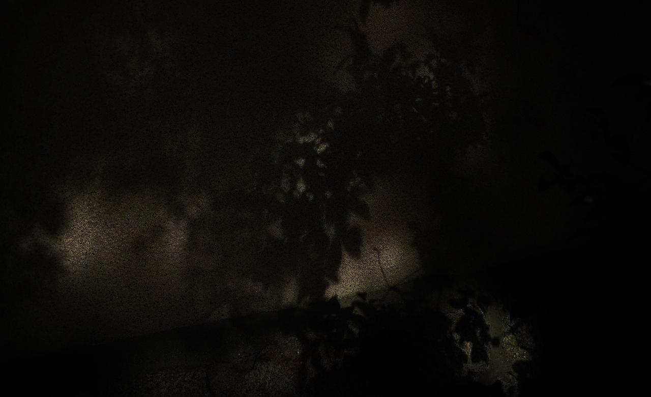 X015大徳寺土塀