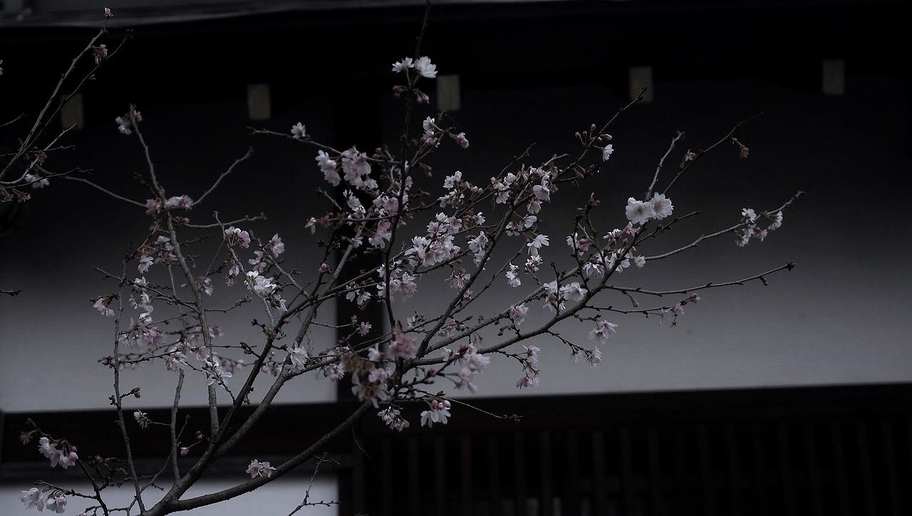 XX012平野神社