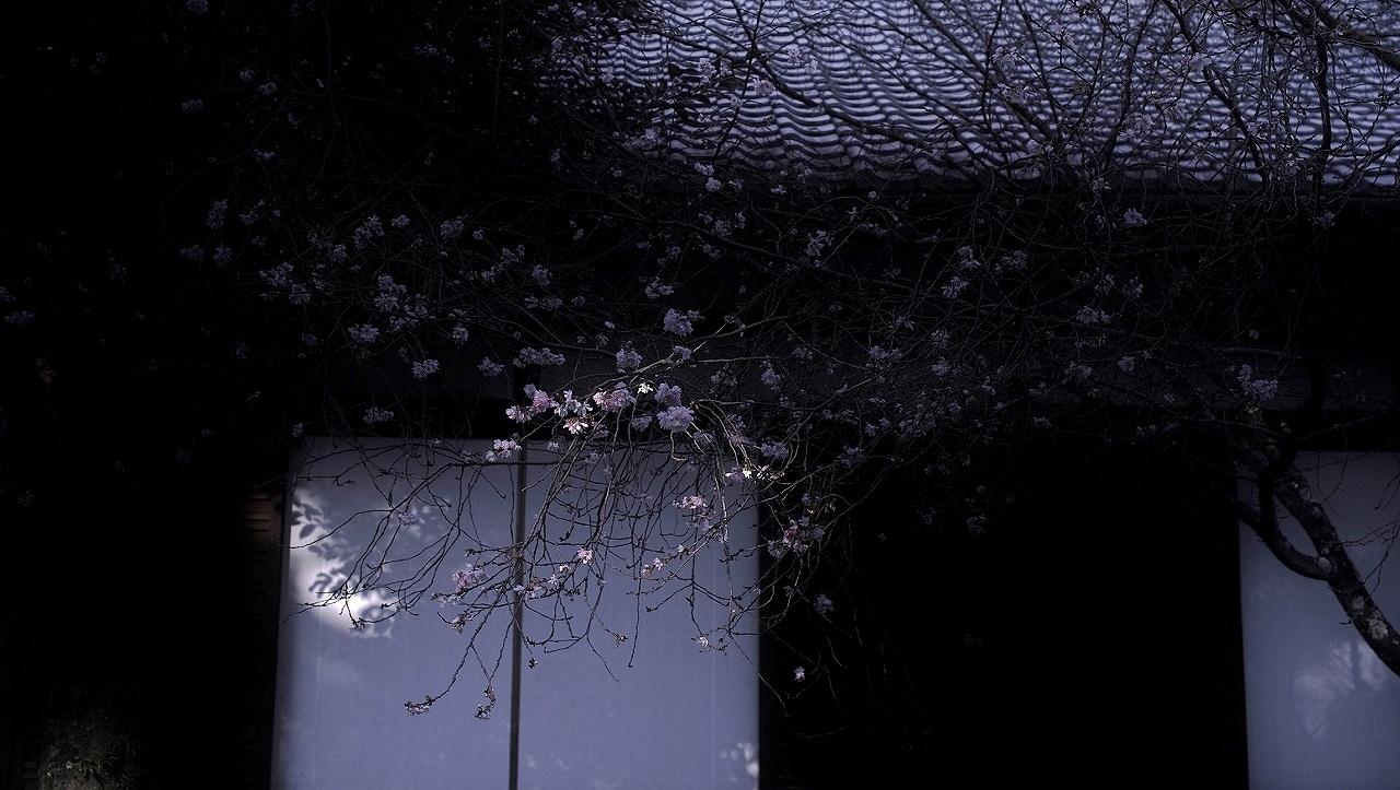 XX166平野神社