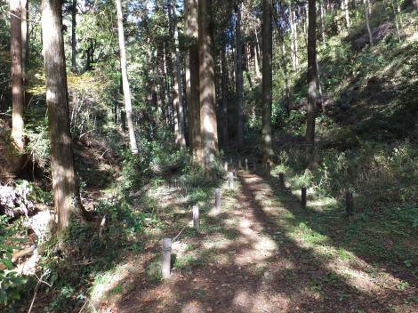 町田市相原町段木入の森