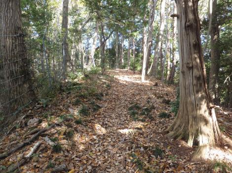 町田・八王子境界尾根道ハイキングコース