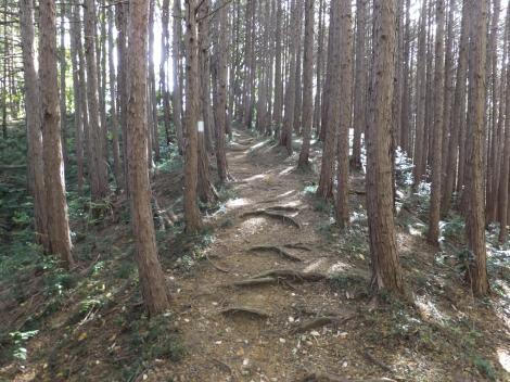 権現平・雨乞い場の碑間ハイキング道