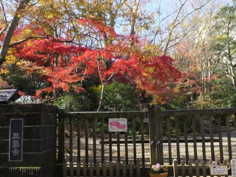 三島市・楽寿園