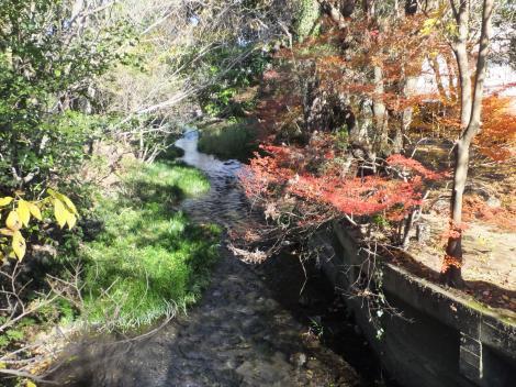 三島市・源兵衛川、水の苑緑地