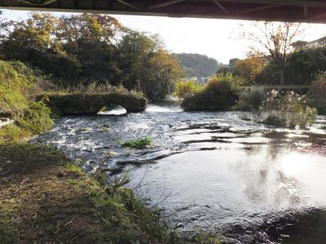 柿田橋下より柿田川下流を望む