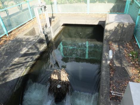 海老名市役所付近・相模川左岸幹線用水路