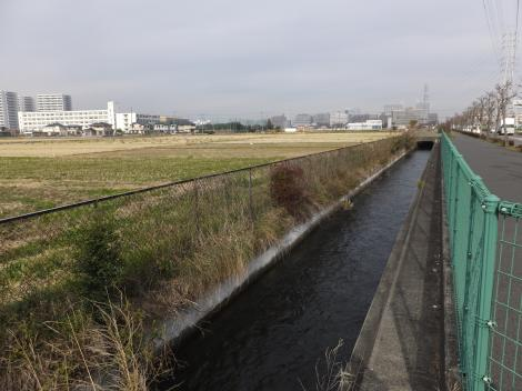 海老名市・相模川左岸幹線用水路