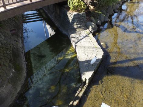 二ケ領用水に小河川が合流?
