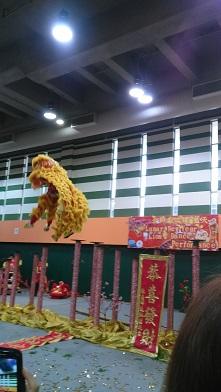 DSC_0113黄色lion