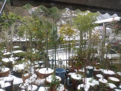 雪2日目 2016 1月26