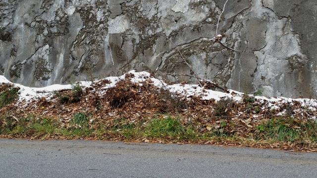 11.25田山の雪