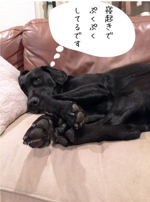 寝起きの犬