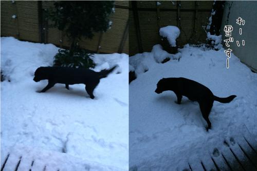 雪の中のワンコ