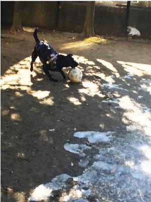 ボールで遊ぶ犬03