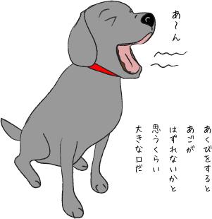 あくびをする犬