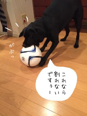 ボールと犬03