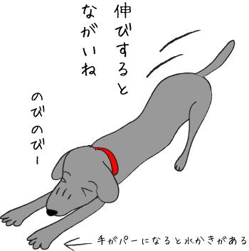 のびのびーする犬