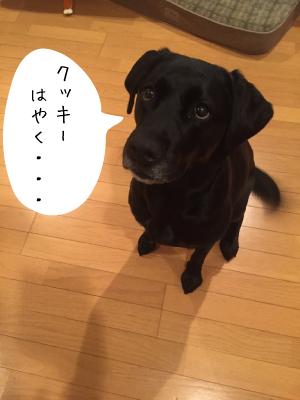 クッキーを待つ犬
