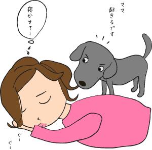 朝起こす犬