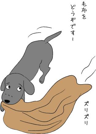 毛布を運ぶ犬