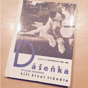 ダーシェンカ 表紙