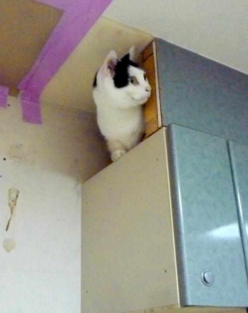 排気ダクトの中の猫
