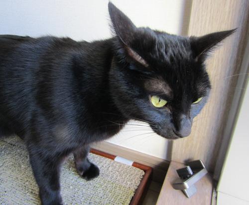 黒猫チョコややイカ耳