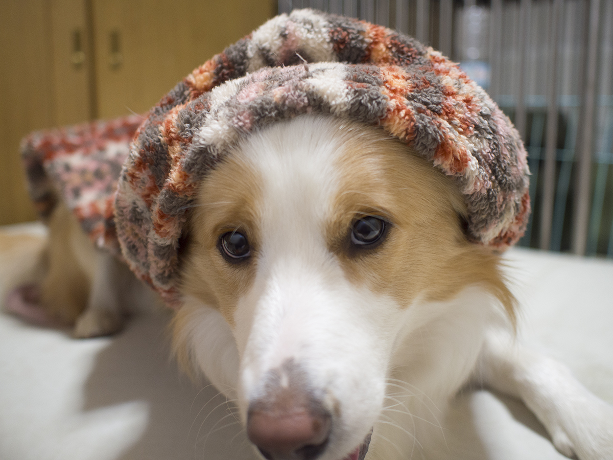 寒そうだったから着せてみました