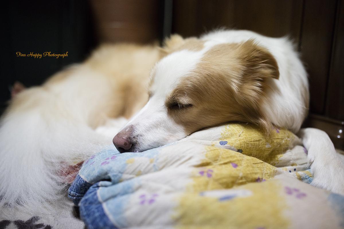 穏やかな寝顔
