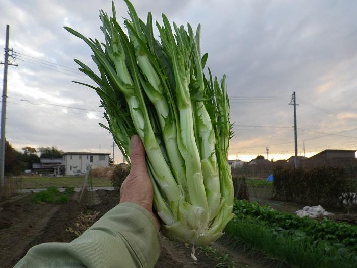 収穫4_15_12_12
