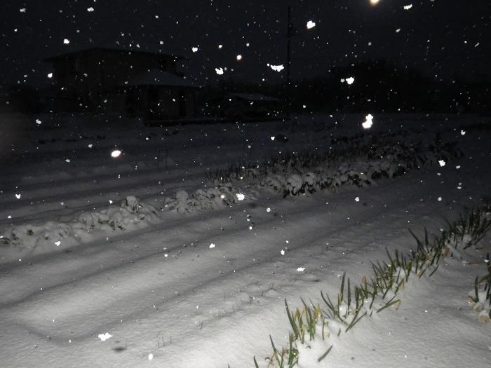 雪2_16_01_20