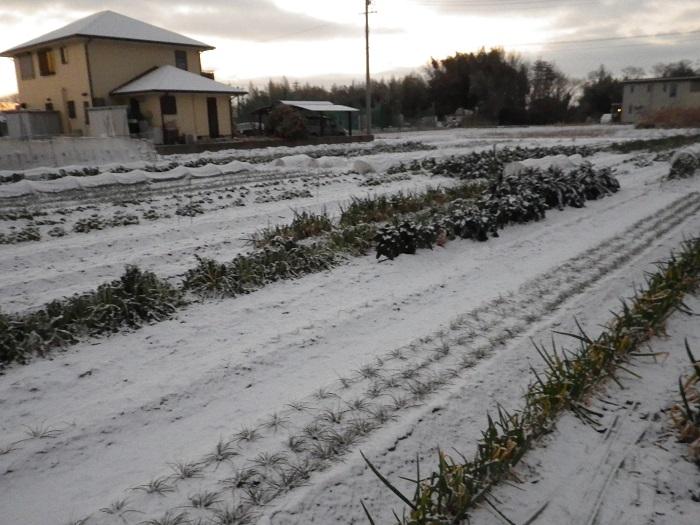 雪景色16_01_25