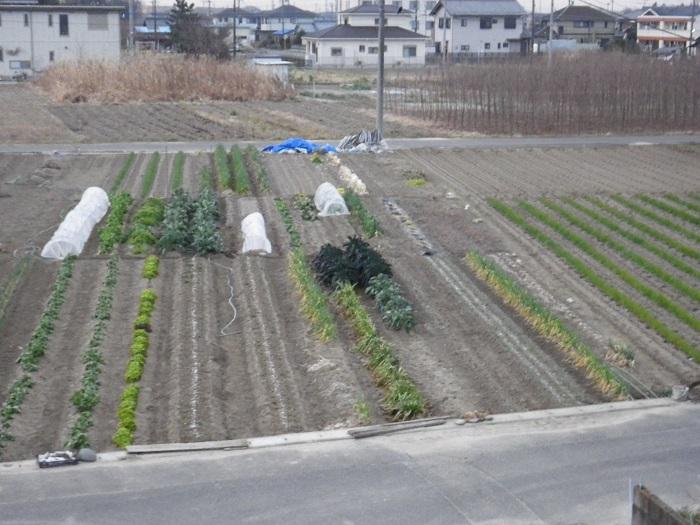 畑の様子1_16_02_09