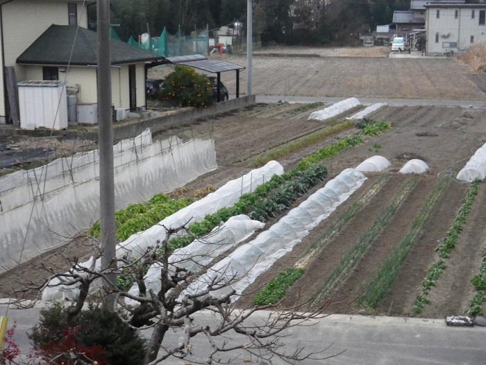 畑の様子2_16_02_09
