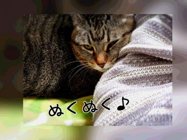 PhotoGrid_1450234843416.jpg