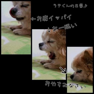 PhotoGrid_1452910787216.jpg