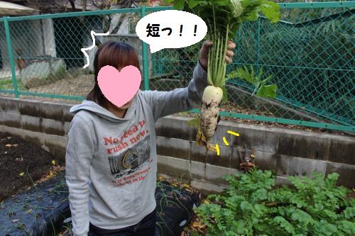 006_convert_20151212222625.jpg