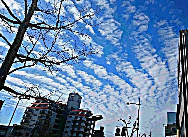 DSC_07960131.jpg