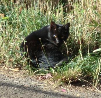 外猫1512-3