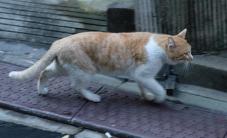 外猫1512-4