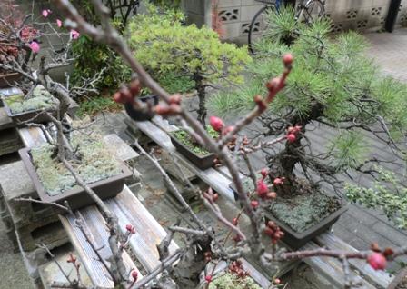 梅開花16-2