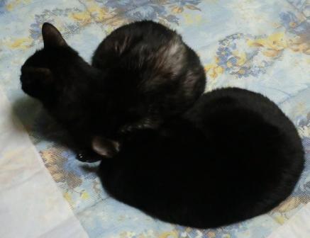 カタツムリ猫