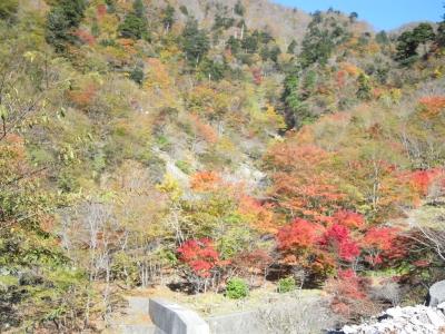 犬越隧道付近の紅葉
