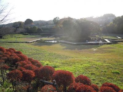 厳島湿生公園1207