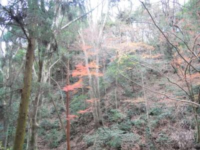 谷戸川沿い151221