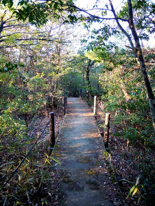 平和公園の山道。