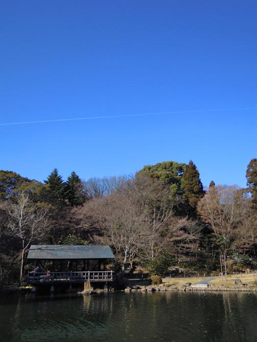 東山植物園内の風景。
