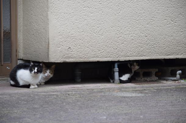 猫2,4,5