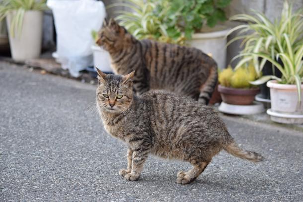 猫29,30