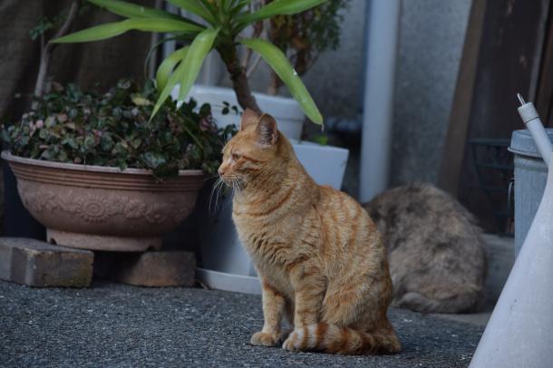 猫39,40